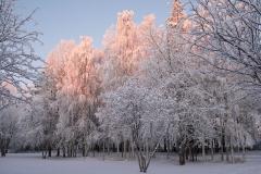 Winter day in November